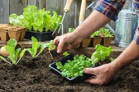 31600640 S Herbs Gardening Soil